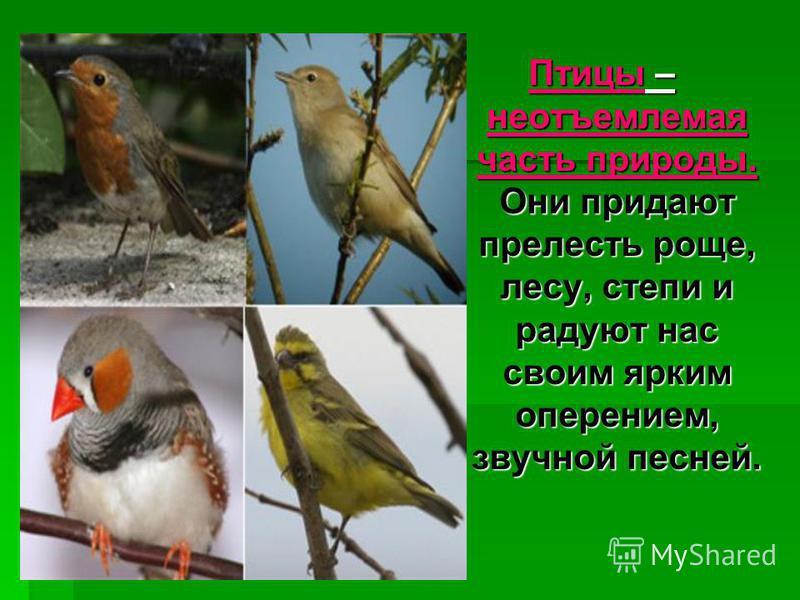 Птицы – неотъемлемая часть природы. Они придают прелесть роще, лесу, степи и радуют нас своим ярким оперением, звучной песней.