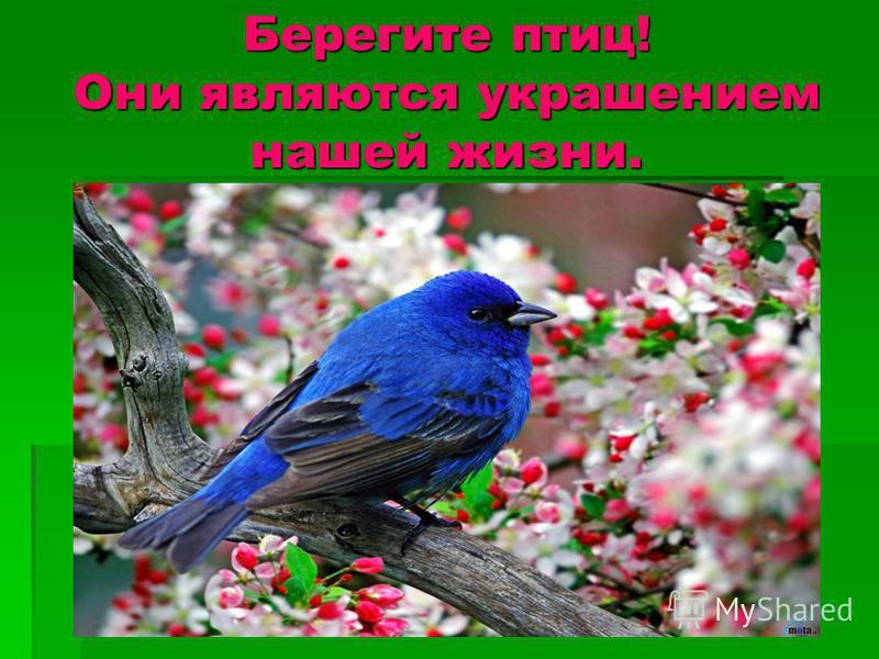 Берегите птиц! Они являются украшением нашей жизни.