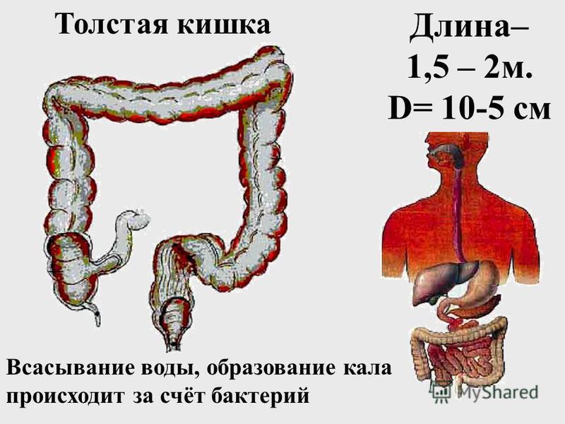 Липиды пищи Пищеварительный канал: рот, глотка, пищевод, желудок Пищеварительный канал: рот, глотка, пищевод, желудок Двенадцатиперстная кишка Тонкий кишечник Фермент липаза в 12-перстной кишке Фермент лецитиназа, липаза в тонком кишечнике