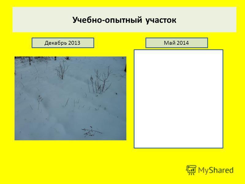Учебно-опытный участок Декабрь 2013Май 2014