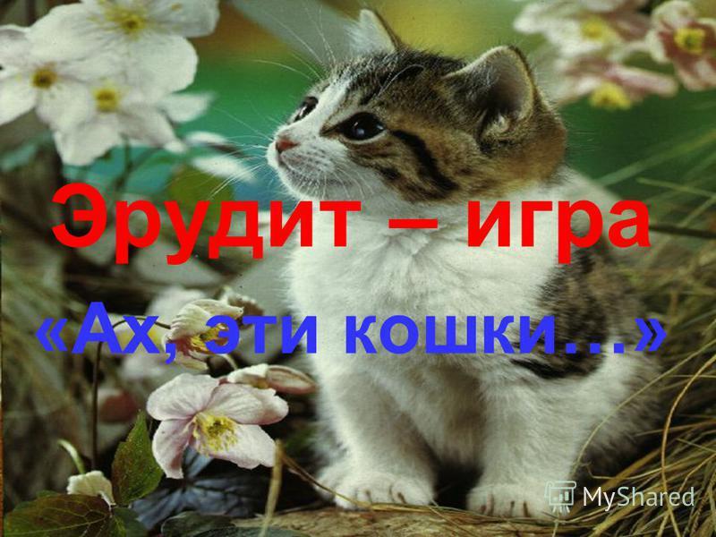 Эрудит – игра «Ах, эти кошки…»