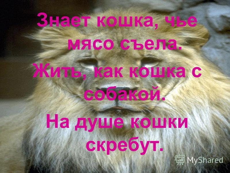 Знает кошка, чье мясо съела. Жить, как кошка с собакой. На душе кошки скребут.