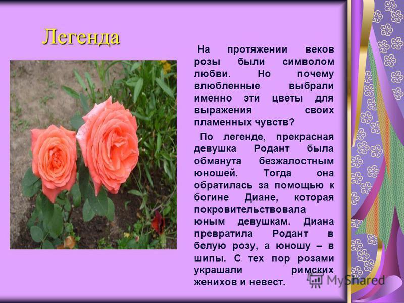 Легенда Легенда На протяжении веков розы были символом любви. Но почему влюбленные выбрали именно эти цветы для выражения своих пламенных чувств? По легенде, прекрасная девушка Родант была обманута безжалостным юношей. Тогда она обратилась за помощью