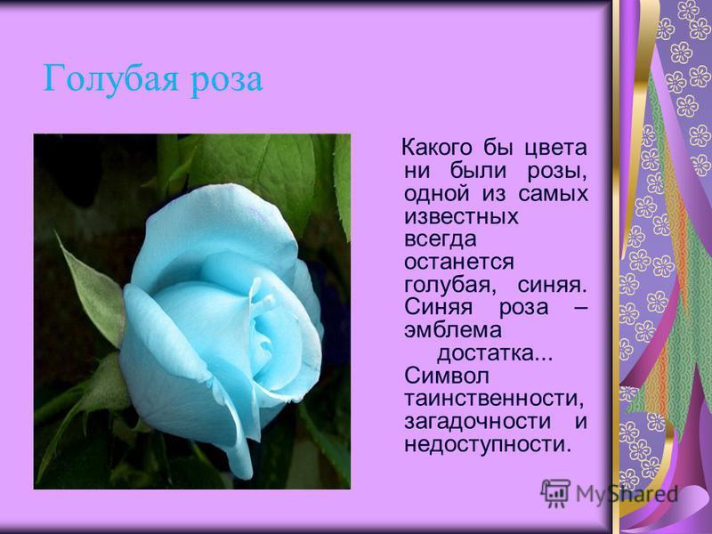 Голубая роза Какого бы цвета ни были розы, одной из самых известных всегда останется голубая, синяя. Синяя роза – эмблема достатка... Символ таинственности, загадочности и недоступности.