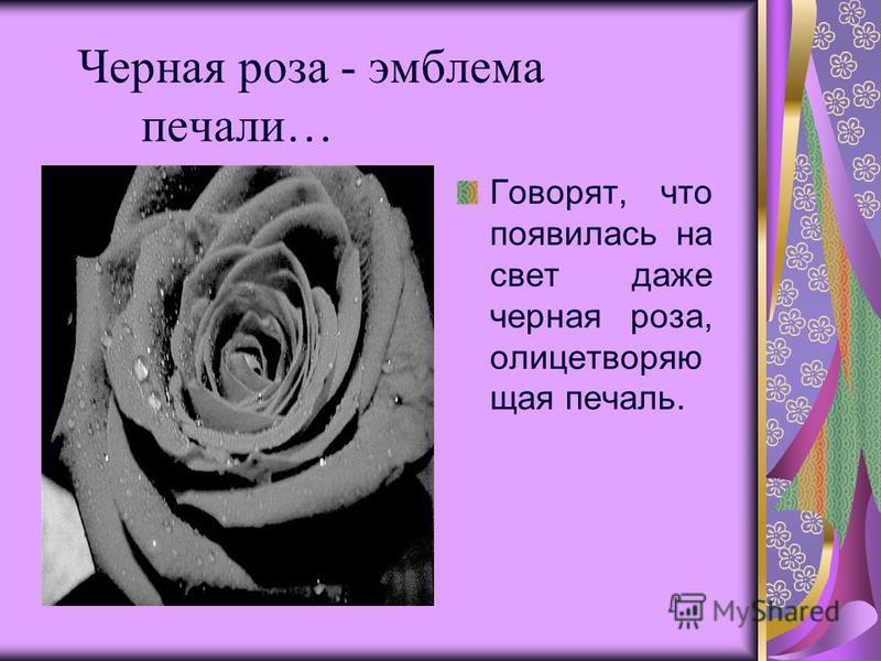 Черная роза - эмблема печали… Говорят, что появилась на свет даже черная роза, олицетворяющая печаль.