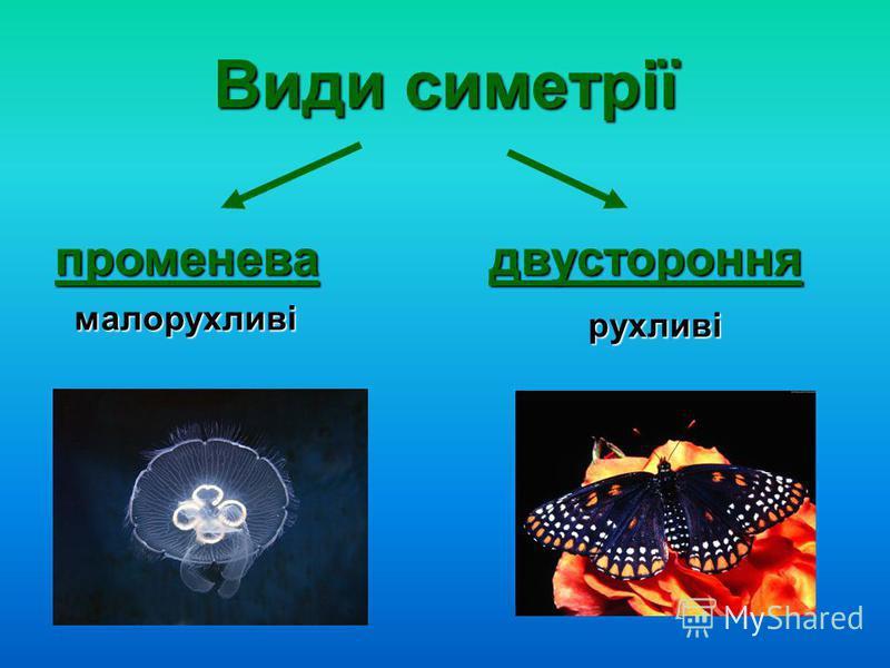 Види симетрії променевадвустороння малорухливі рухливі