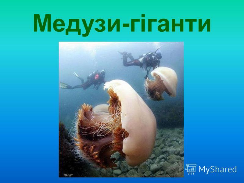 Медузи-гіганти