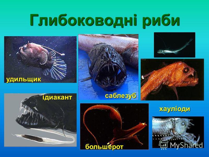 Глибоководні риби удильщик ідиакант саблезуб большерот хауліоди