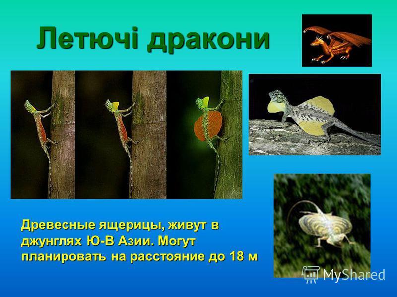 Летючі дракони Древесные ящерицы, живут в джунглях Ю-В Азии. Могут планировать на расстояние до 18 м