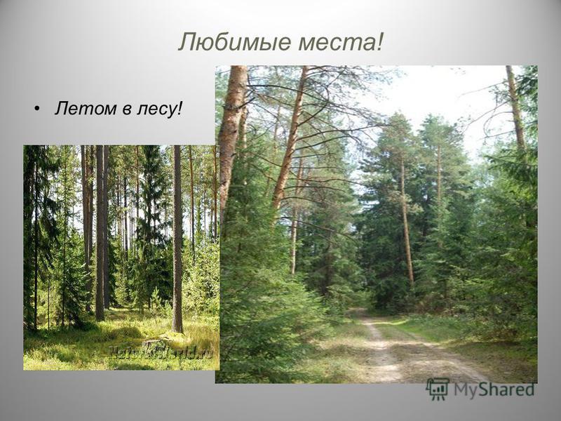 Любимые места! Летом в лесу!