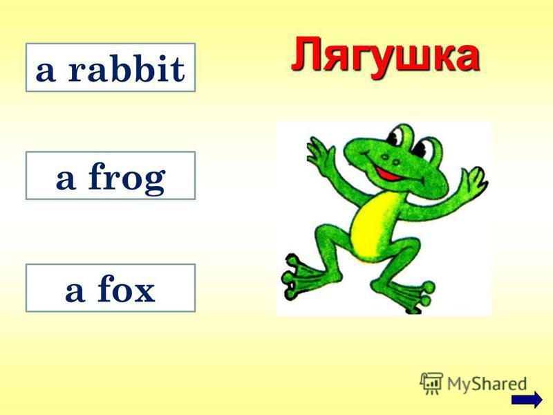 a fox a rabbit a frog