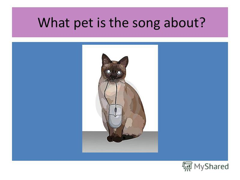 What pet is the song about?