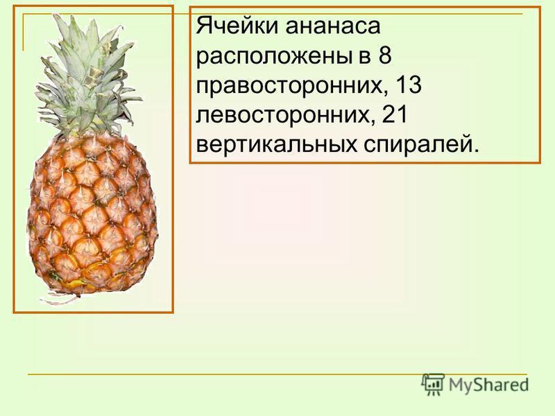 Ячейки ананаса расположены в 8 правосторонних, 13 левосторонних, 21 вертикальных спиралей.