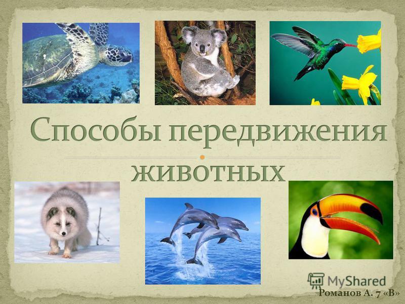Романов А. 7 «В»
