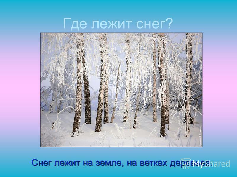 Где лежит снег? Снег лежит на земле, на ветках деревьев.
