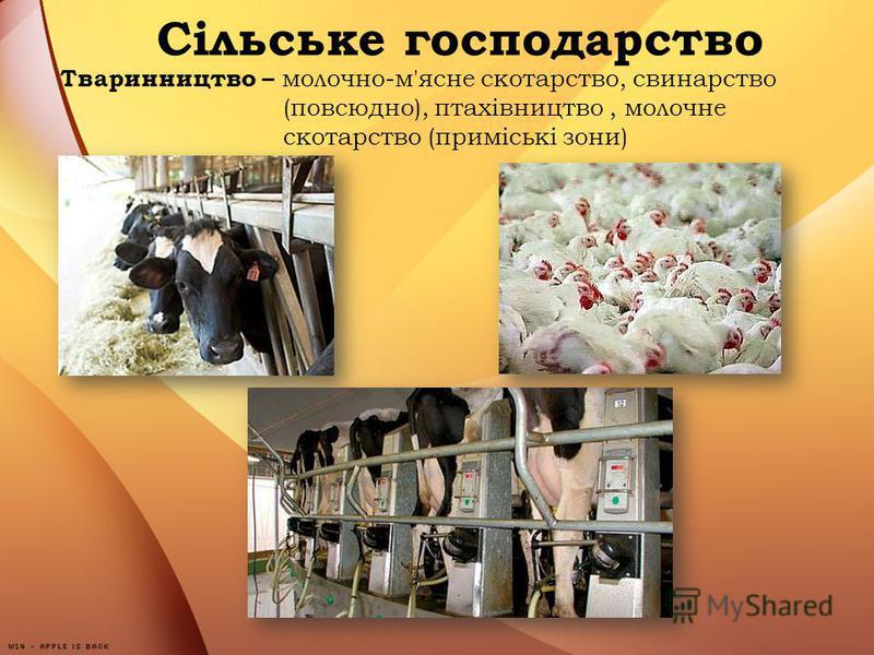 Тваринництво – молочно-м'ясне скотарство, свинарство (повсюдно), птахівництво, молочне скотарство (приміські зони)