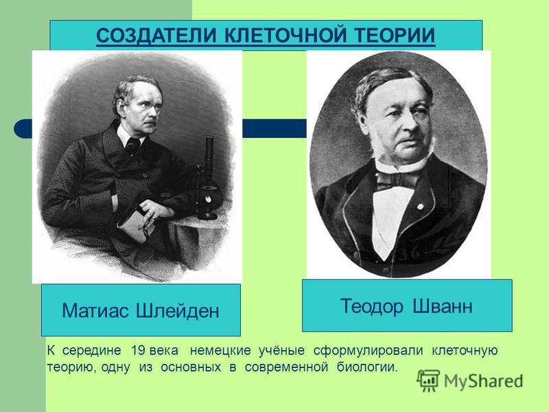 СОЗДАТЕЛИ КЛЕТОЧНОЙ ТЕОРИИ Матиас Шлейден Теодор Шванн К середине 19 века немецкие учёные сформулировали клеточную теорию, одну из основных в современной биологии.