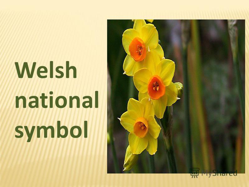 Welsh national symbol
