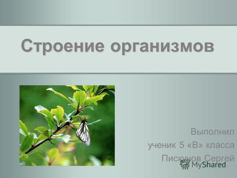 Строение организмов Выполнил ученик 5 «В» класса Пискунов Сергей