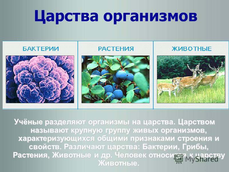 Царства организмов Учёные разделяют организмы на царства. Царством называют крупную группу живых организмов, характеризующихся общими признаками строения и свойств. Различают царства: Бактерии, Грибы, Растения, Животные и др. Человек относится к царс