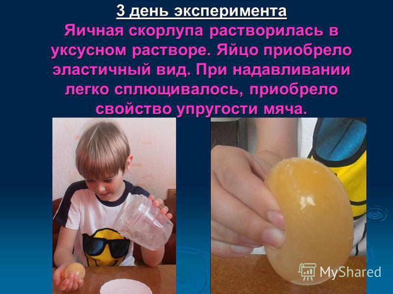 3 день эксперимента Яичная скорлупа растворилась в уксусном растворе. Яйцо приобрело эластичный вид. При надавливании легко сплющивалось, приобрело свойство упругости мяча. 3 день эксперимента Яичная скорлупа растворилась в уксусном растворе. Яйцо пр