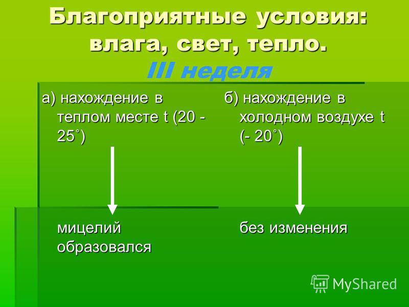 Благоприятные условия: влага, свет, тепло. III неделя а) нахождение в теплом месте t (20 - 25˚) мицелий образовался б) нахождение в холодном воздухе t (- 20˚) без изменения