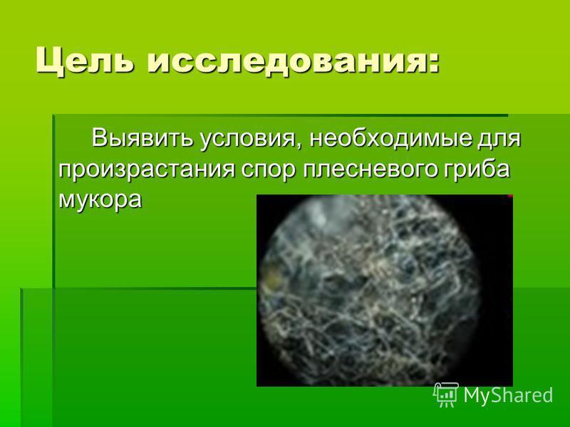 Цель исследования: Выявить условия, необходимые для произрастания спор плесневого гриба мукора