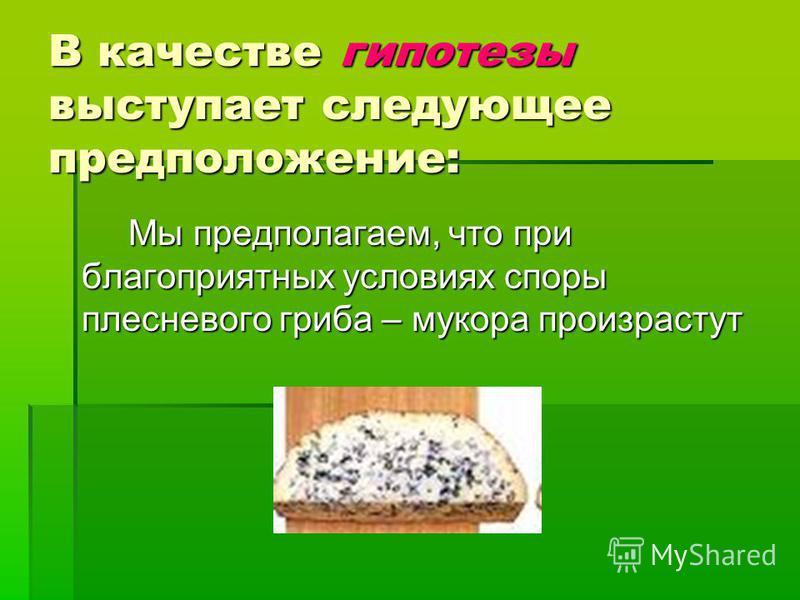В качестве гипотезы выступает следующее предположение: Мы предполагаем, что при благоприятных условиях споры плесневого гриба – мукора произрастут