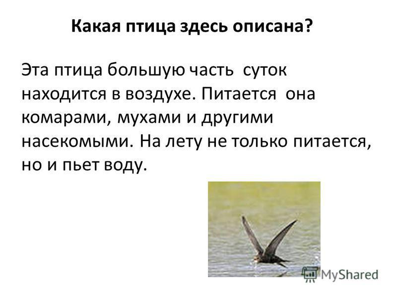 Какая птица здесь описана? Эта птица большую часть суток находится в воздухе. Питается она комарами, мухами и другими насекомыми. На лету не только питается, но и пьет воду.