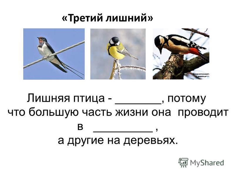 «Третий лишний» Лишняя птица - _______, потому что большую часть жизни она проводит в _________, а другие на деревьях.