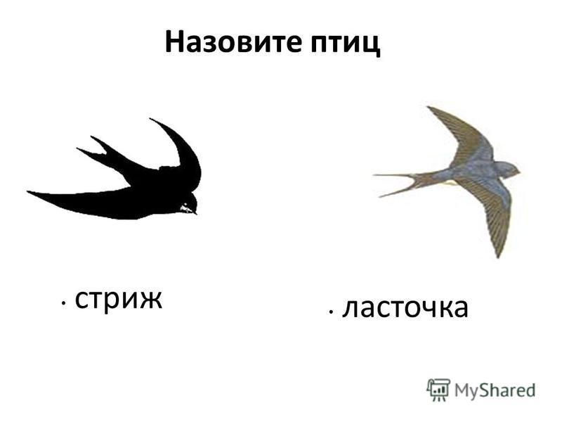 Назовите птиц стриж ласточка