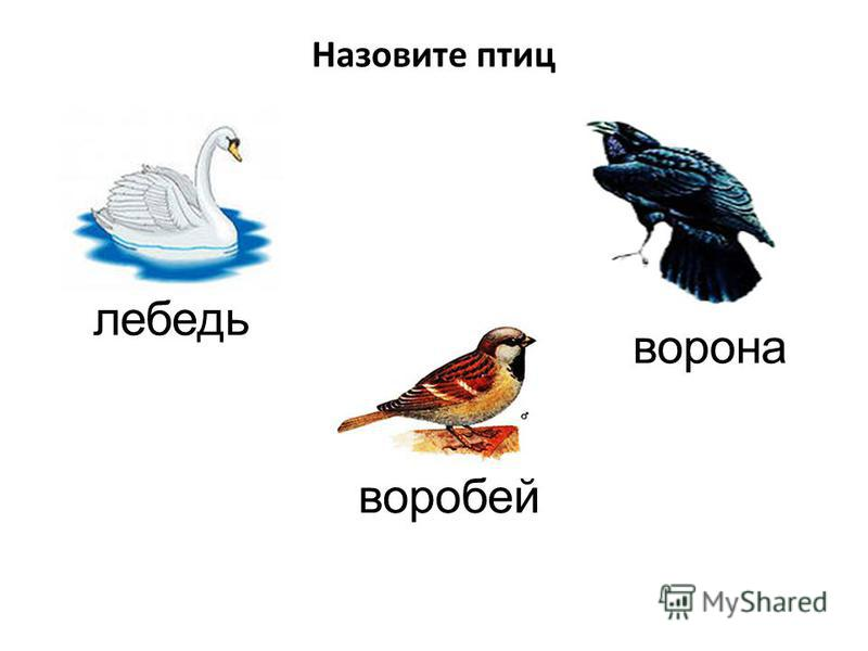 лебедь ворона воробей