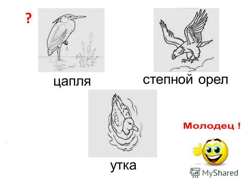 ? цапля степной орел утка