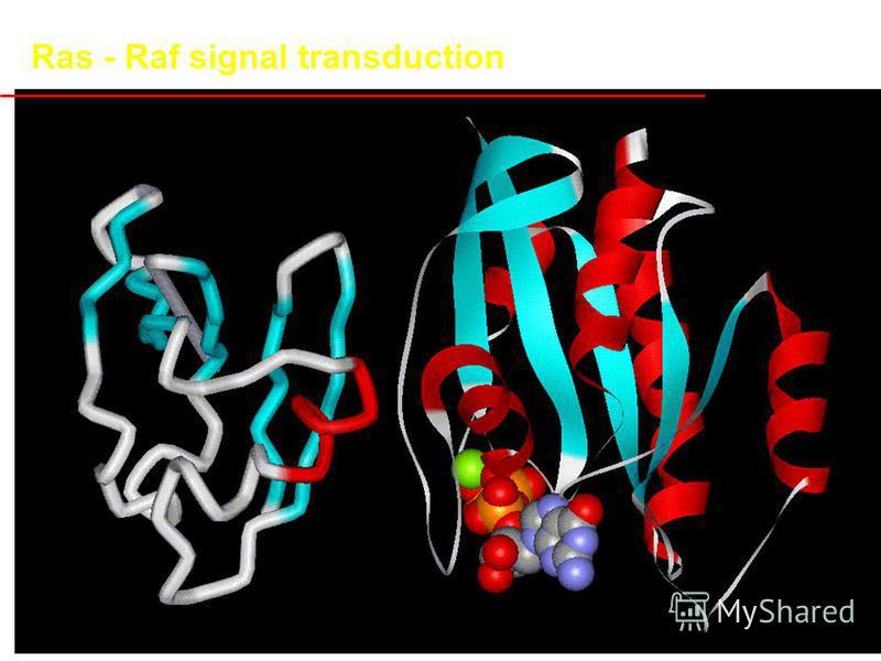 Ras - Raf signal transduction