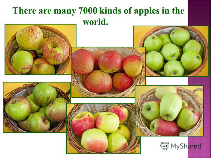 There are many 7000 kinds of apples in the world.