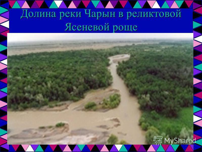 Долина реки Чарын в реликтовой Ясеневой роще