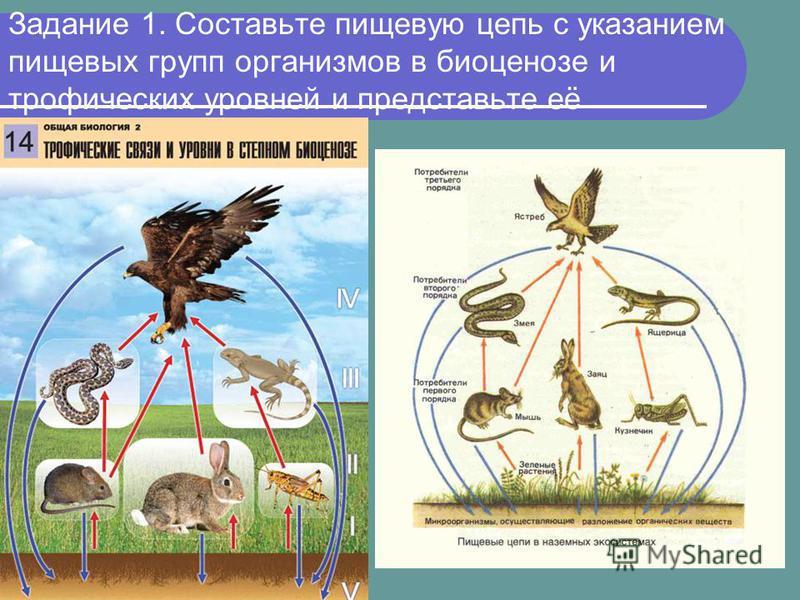 Задание 1. Составьте пищевую цепь с указанием пищевых групп организмов в биоценозе и трофических уровней и представьте её