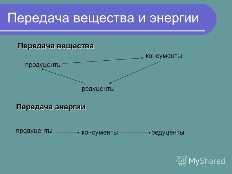 Передача вещества и энергии Передача вещества продуценты консументы редуценты Передача энергии продуценты консументы редуценты