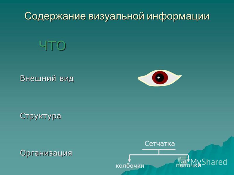 Содержание визуальной информации ЧТО Внешний вид Структура Организация Сетчатка колбочки палочки