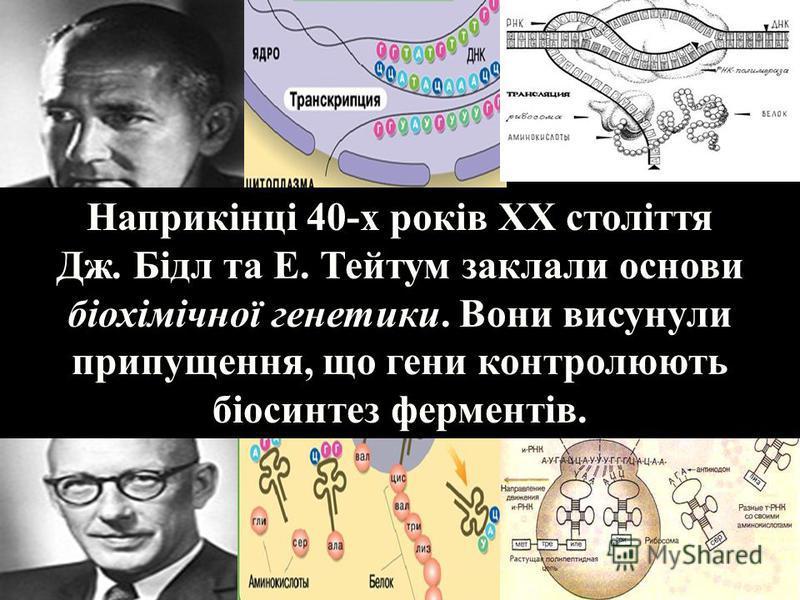 Наприкінці 40-х років ХХ століття Дж. Бідл та Е. Тейтум заклали основи біохімічної генетики. Вони висунули припущення, що гени контролюють біосинтез ферментів.