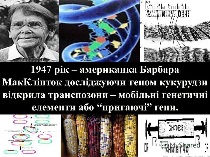 1947 рік – американка Барбара МакКлінток досліджуючи геном кукурудзи відкрила транспозони – мобільні генетичні елементи або пригаючі гени.