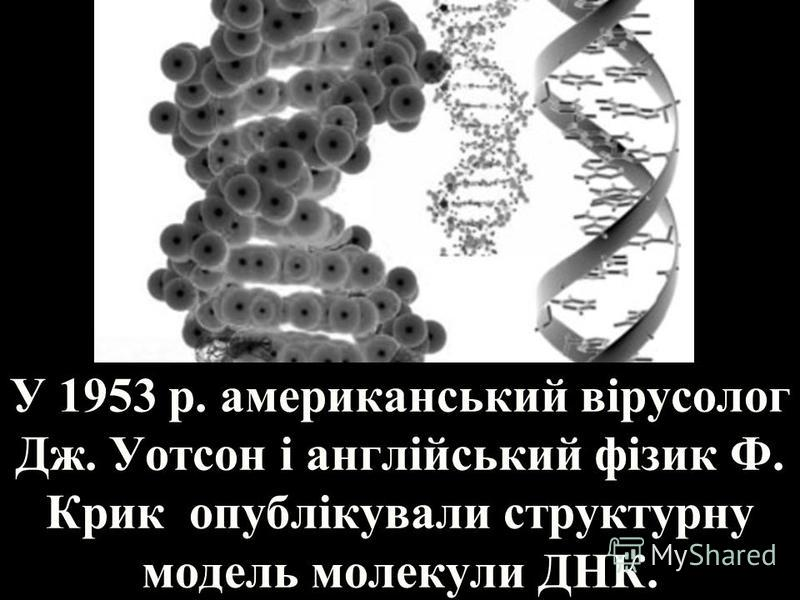 У 1953 р. американський вірусолог Дж. Уотсон і англійський фізик Ф. Крик опублікували структурну модель молекули ДНК.