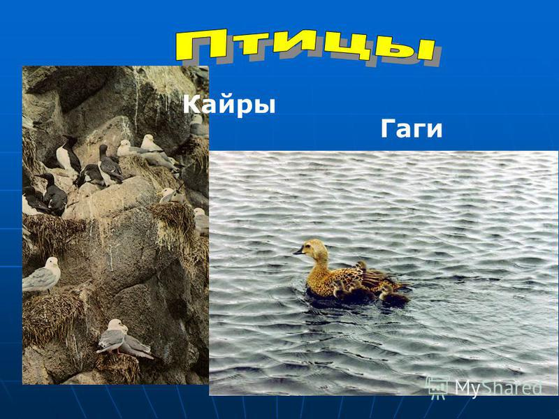 Гаги Кайры