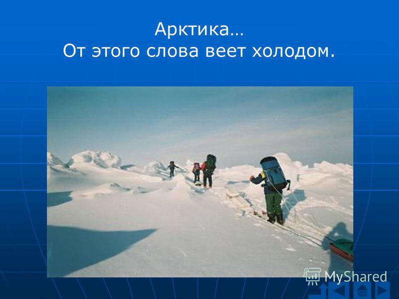 Арктика… От этого слова веет холодом.