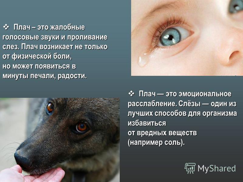 Плач – это жалобные Плач – это жалобные голосовые звуки и проливание слез. Плач возникает не только от физической боли, но может появиться в минуты печали, радости. Плач это эмоциональное Плач это эмоциональное расслабление. Слёзы один из лучших спос