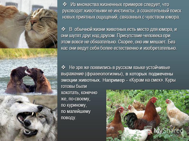 Из множества жизненных примеров следует, что руководят животными не инстинкты, а сознательный поиск новых приятных ощущений, связанных с чувством юмора. Из множества жизненных примеров следует, что руководят животными не инстинкты, а сознательный пои