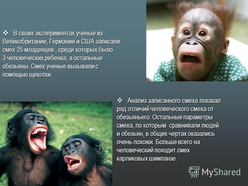 В своих экспериментах ученые из В своих экспериментах ученые из Великобритании, Германии и США записали смех 25 младенцев, среди которых было 3 человеческих ребенка, а остальные обезьяны. Смех ученые вызывали с помощью щекотки. Анализ записанного сме