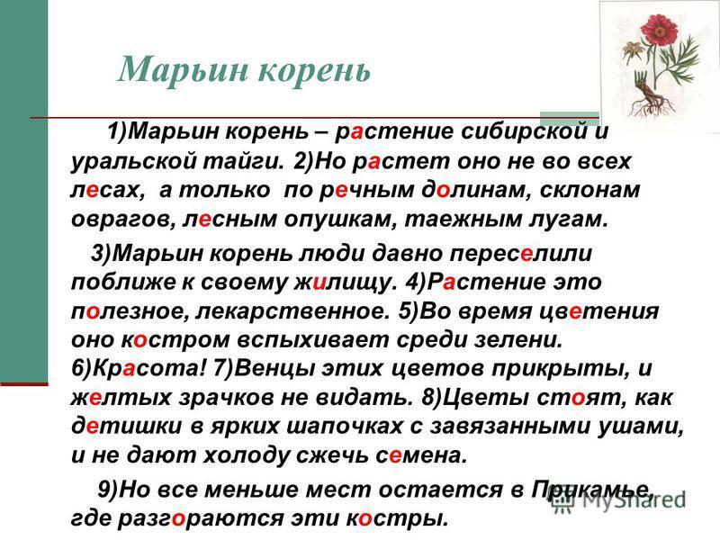 Марьин корень 1)Марьин корень – растение сибирской и уральской тайги. 2)Но растет оно не во всех лесах, а только по речным долинам, склонам оврагов, лесным опушкам, таежным лугам. 3)Марьин корень люди давно переселили поближе к своему жилищу. 4)Расте