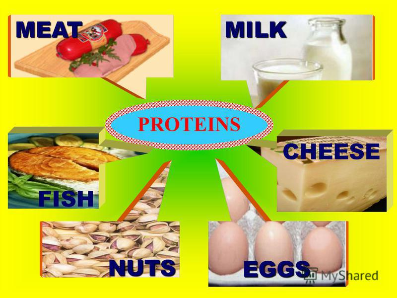 PROTEINS CHEESE EGGS MILK FISH NUTS MEAT