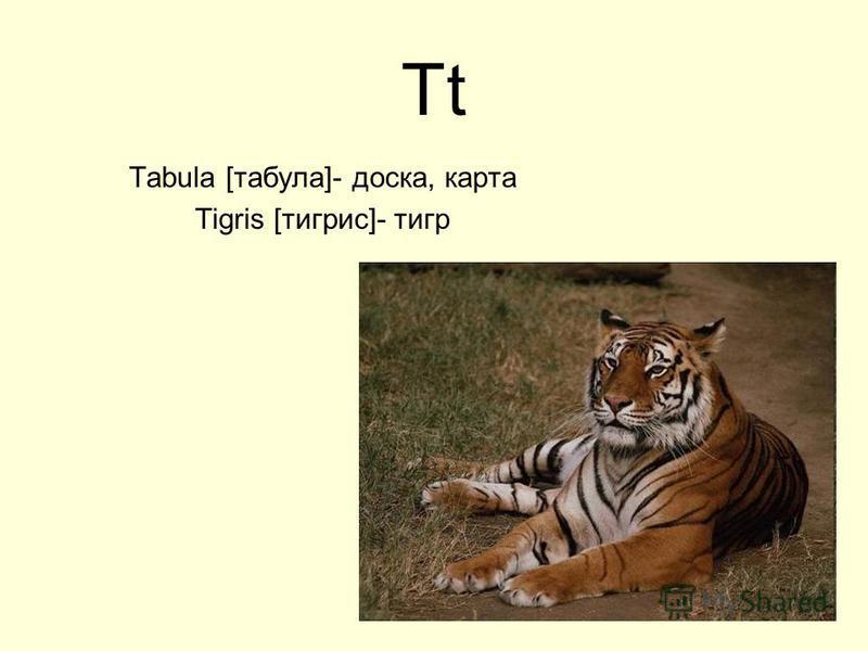 Tt Tabula [табула]- доска, карта Tigris [тигрис]- тигр